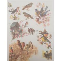 Rizspapír - Kerti madarak